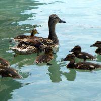 Ente Süß Sauer
