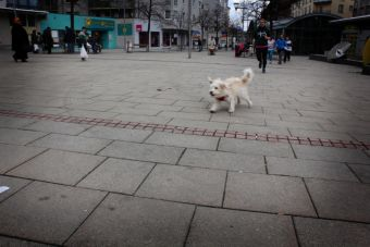 Unser Wachhund